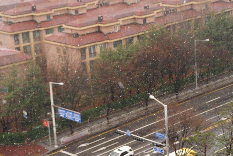 이번 겨울의 마지막 눈이 될 것으로 보이는 눈이 펑펑…